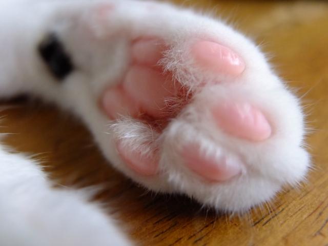 猫が元気になっちゃうのに、病気なの?猫の甲状腺機能亢進症は食事で予防し、食事で癒す。