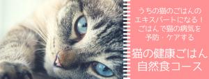 猫ごはんレッスン