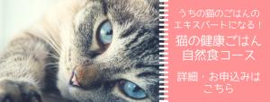 猫の自然食マスターコース講座のご案内