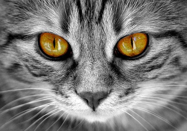 猫の甲状腺機能亢進症を避けるための7つのヒント