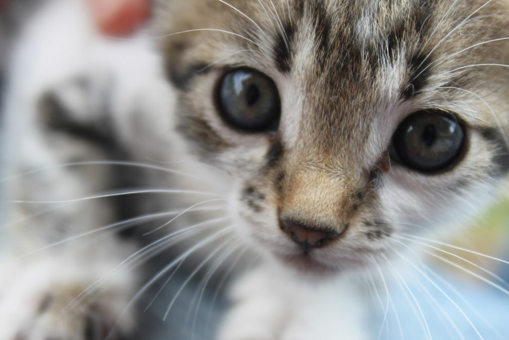 猫の背中が波打つ?猫の知覚過敏症の症状から食事療法まで