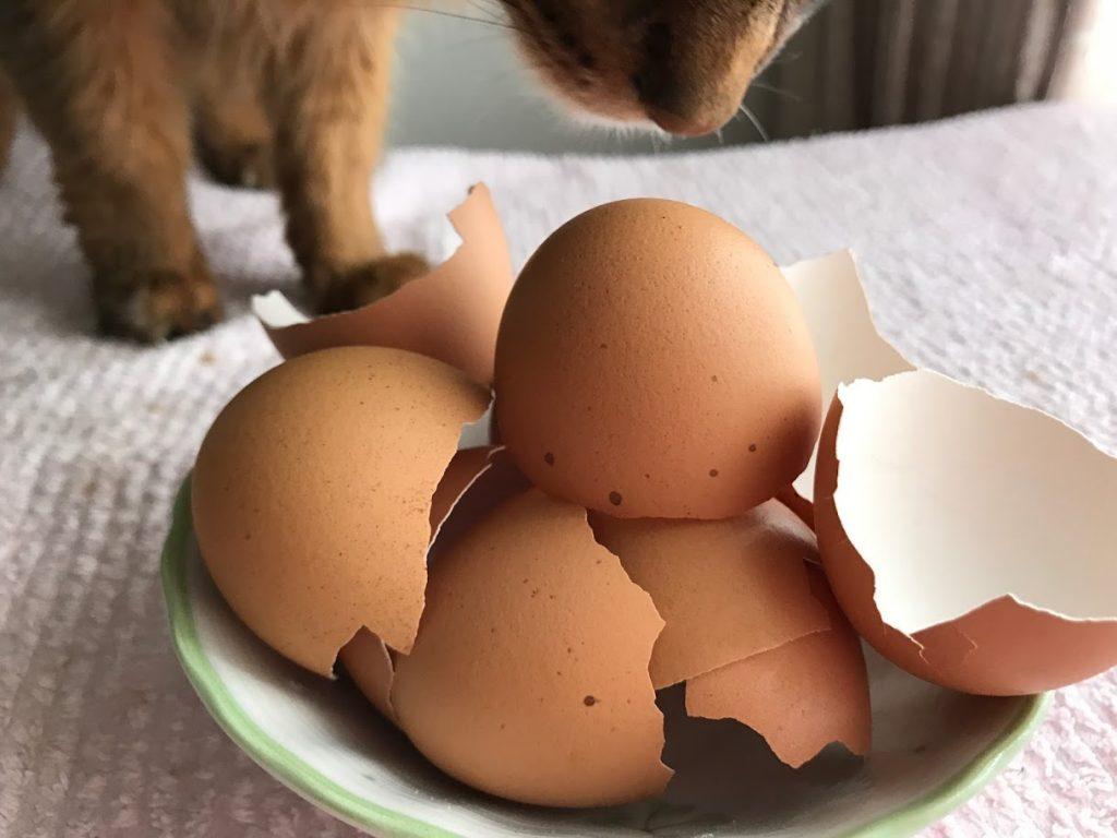 超簡単!5分でできる猫のカルシウム源「卵殻パウダー」の作り方