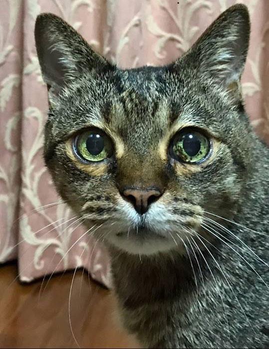 猫の目にシミを見つけたら