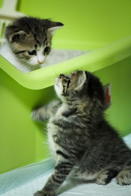 ホリスティックケア的猫砂と猫トイレの選び方