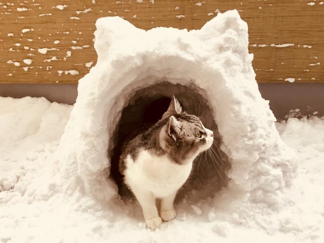 猫の冬の過ごし方ナチュラルケア~尿路疾患・泌尿器系~