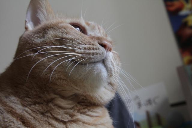 猫のお客様の声