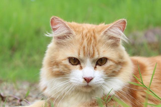 猫の肝臓のナチュラルケア