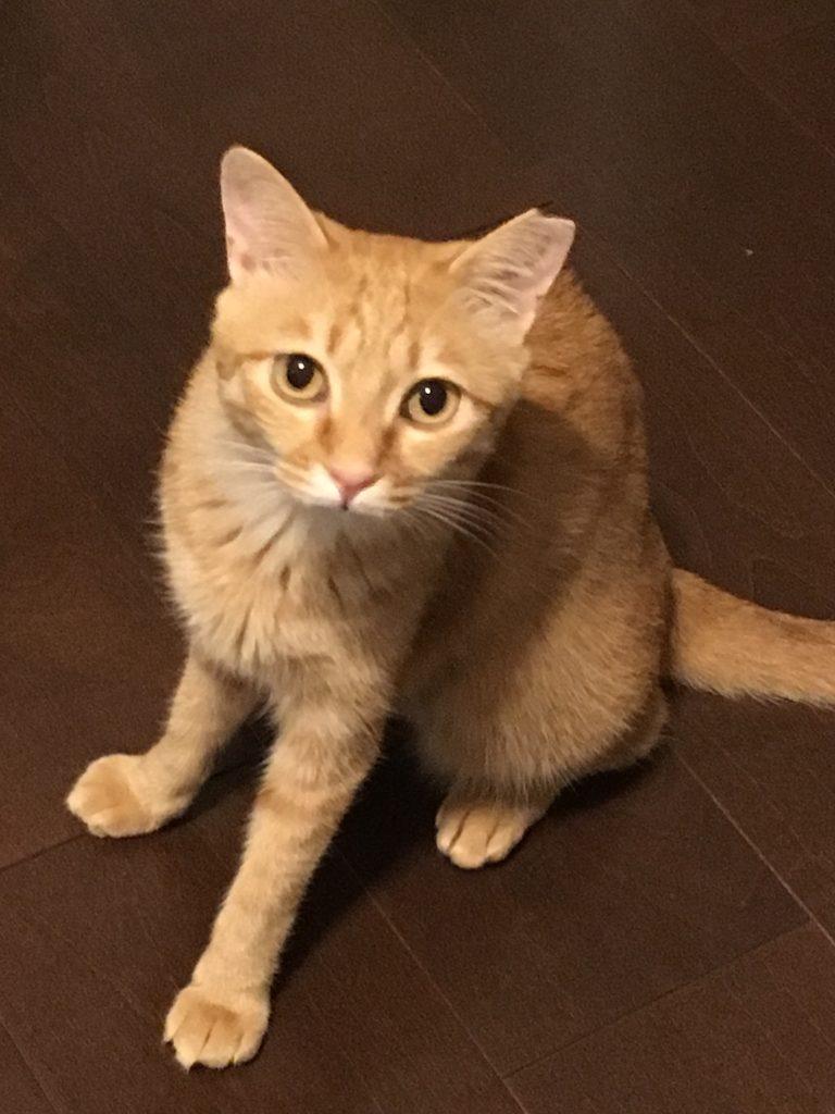 ミエル様(Mix猫・推定3歳~・雌・避妊)のお客様の声