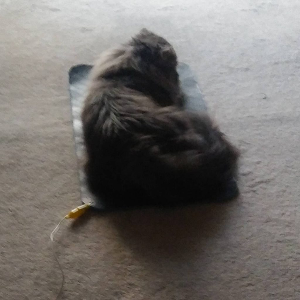 猫にもお勧め!猫のアーシング2つの方法