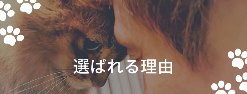 にゃんずきっちんが猫とお客様に選ばれる理由