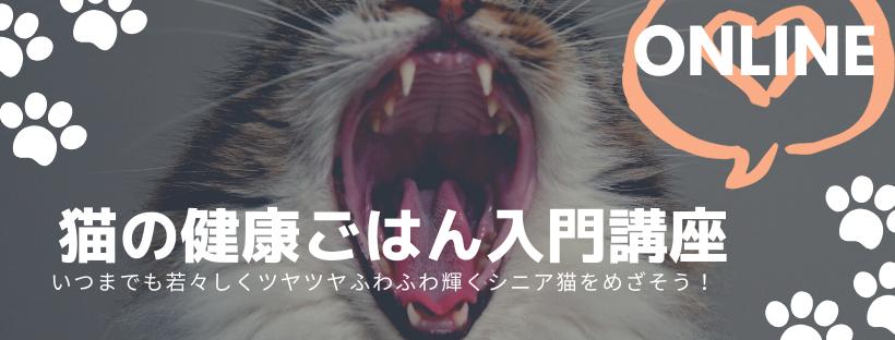 猫の健康ごはん・手作りごはん自然食入門講座