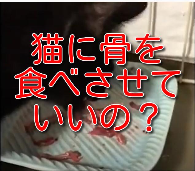 猫に骨を食べさせていいの?