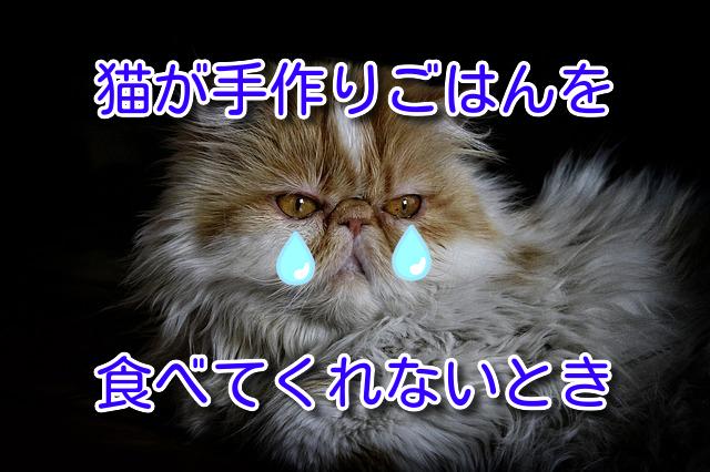 猫が手作りごはんを食べてくれないとき