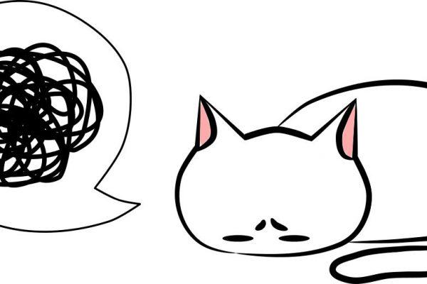 よく見る猫ごはん3つの勘違い