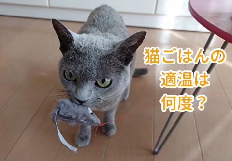 猫のごはんの適温は何度くらい?